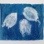 Cyanotypie auf Transparentpapier 63 x 52 cm